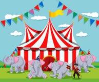 Elephant show at the circus Stock Photos