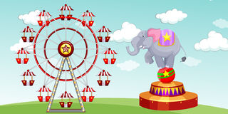 Elephant show and ferris wheel at the funpark Stock Images
