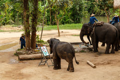 Elephant show. A little elephant show her painting skill Royalty Free Stock Photos