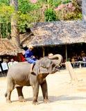 Elephant Show at MaeSa Elephant Camp. royalty free stock images