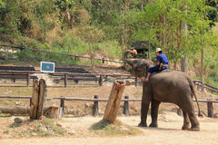 Elephant Show in Chiangmai, Thailand stock images
