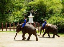 Elephant Show in Nakom Pathom, Thailand. stock image