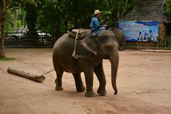 The elephant show one activity that people like to show Thailand royalty free stock image