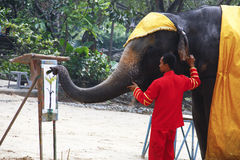 Elephant show Paint. A Picture for Tourist in The Zoo in Thailand Royalty Free Stock Image