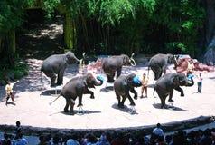 Elephant show Royalty Free Stock Photos