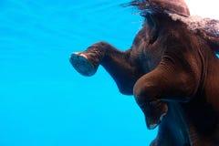 Elephant stock photos