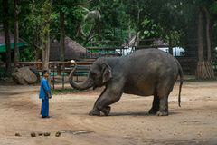 Elephant show at The Thai Elephant Conservation Center Stock Images