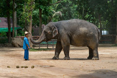 Elephant show at The Thai Elephant Conservation Center Royalty Free Stock Photos