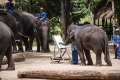 Daily elephant show at The Thai Elephant Conservation Center. Lampang, Thailand - June 7, 2015 : Daily elephant show at The Thai Elephant Conservation Center ( stock images