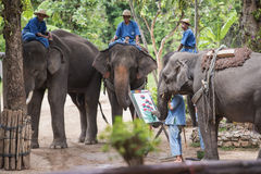 Daily elephant show at The Thai Elephant Conservation Center. Stock Photography