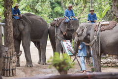 Daily elephant show at The Thai Elephant Conservation Center. royalty free stock photography