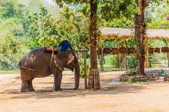 Elephant show at The Thai Elephant Conservation Center, royalty free stock images