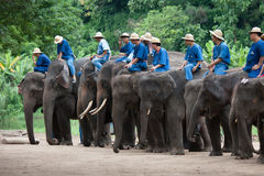 Daily elephant show at The Thai Elephant Conservation Center (TE royalty free stock photography