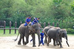 ELEPHANT SHOW, THAILAND. Royalty Free Stock Photo