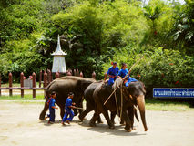 Elephant Show in Thailand Royalty Free Stock Image