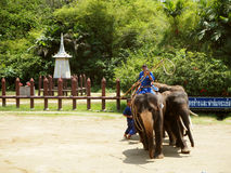 Elephant Show in Thailand. Elephant Show in Nakom Pathom, Thailand royalty free stock photography