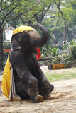 Elephant show for Tourist. In The Zoo in Thailand Royalty Free Stock Photos