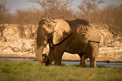 Elephant showering Royalty Free Stock Photos