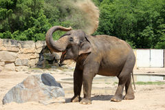 Elephant showering himself with sand Stock Images