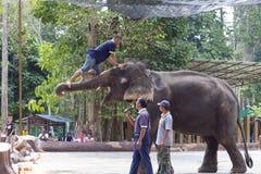 Elephant shows. KUALA GANDAH, MALAYSIA - SEPTEMBER 24: Staff of Kuala Gandah Elephant Conservation Centre climbing an elephant during an elephants show on SEP 24 Royalty Free Stock Photo