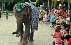 Elephant Shows Stock Images