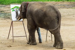 Elephant shows skill to the audiences. Chiang Mai September 11, 2014 : Elephant shows skill to the audiences. Most popular show at the Mae Tang elephant camp in Royalty Free Stock Photos