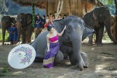 Elephant shows Royalty Free Stock Photo