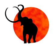 Elephant silhouette. Black elephant silhouette with red sun behind Vector Illustration
