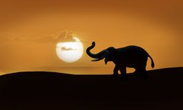 Elephant silhouette. Male elephant with tusks and trunk raised, silhouette against a golden sunrise or sunset