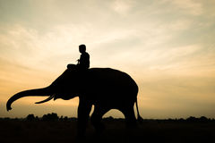Elephant silhouette. Elephant and man silhouette  during sunrise in the morning Royalty Free Stock Photos