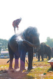 Elephant Silhouette Spraying Water Bath Royalty Free Stock Photography