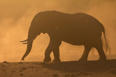 Elephant silhouette at sunset Royalty Free Stock Image