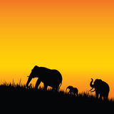 Elephant silhouette walking illustration. With black grass Royalty Free Stock Images