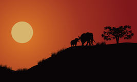 Elephant silhouette walking illustration. With black grass Stock Photos
