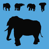 Elephant silhouettes collection Stock Photos