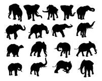 Elephant Silhouettes Set. A set of elephant animal silhouettes in various positions Stock Photo
