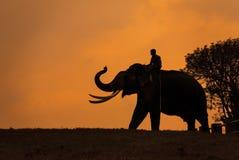 Elephant silhoutte, Mudumalai, Tamilnadu, India
