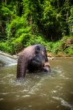 Elephant sits in waterfall, river Royalty Free Stock Photo