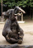 Elephant sitting royalty free stock photography