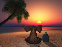 Elephant sitting on a beach at sunset Stock Photography