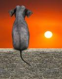 Elephant Sitting, Sunrise, Sunset, Nature vector illustration