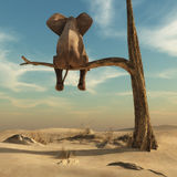 Elephant sitting on thin branch of withered tree Stock Images