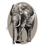 Elephant sketch graphics vector Royalty Free Stock Photos