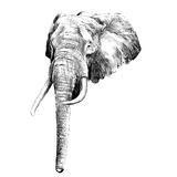 Elephant sketch graphics vector Stock Images