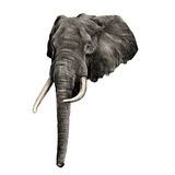 Elephant sketch graphics vector Stock Photography