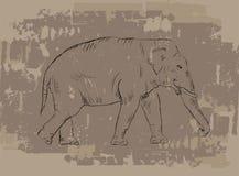 Elephant sketch on grunge background Stock Images