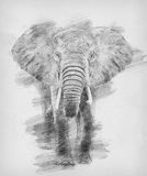 Elephant. Sketch with pencil. Elephant. Black and white sketch with pencil stock illustration
