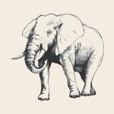 Elephant Sketch Stock Photo
