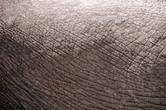 Elephant skin stock image
