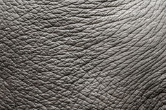 Free Elephant Skin Stock Photography - 15700172